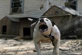 مشهد مؤثر.. كلب يحاول إنعاش صديقه بعد أن صدمته سيارة