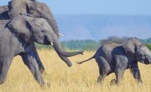 ليست كل الحيوانات تعرف أجدادها كما نعرفها.. لكن ما هو دور الأجداد في مملكة الحيوان؟