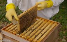 فيديو مذهل..(رقصة النحل) للدفاع عن النفس