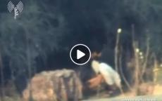 شاهد: لحظة استهداف مجموعة من المواطنين بقصف إسرائيلي في غزة