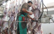 دائرة البيطرة في بلدية غزة تشرف على ذبح  (11) ألف رأس من الماشية