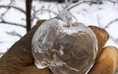 حقيقة ثمرة تفاح الجن في ميشيغان الأميركية