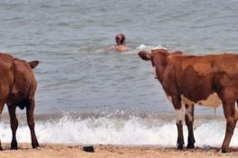 شواطئ العراة لتهدئة الأبقار.. والعراة يعترضون