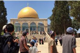 دعوات يهودية لاقتحام الأقصى غدًا تزامنًا مع انتخابات بلدية الاحتلال