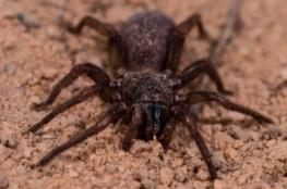 معركة بين رجل أسترالي وعنكبوت (لا يموت) تتسبب في استدعاء الشرطة