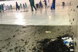 شاهد:لم يكن جراداً.. ماهي الحشرات (غير المألوفة) التي غزت الحرم المكي والمدينة المنورة؟