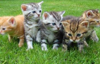 أستراليا تقتل مليوني قطة.. وعاصفة غضب عالمية