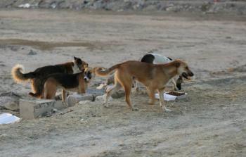 الاشتباه بإصابة 18 جنديا إسرائيليا بداء الكلب في الجولان