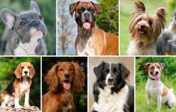 أنواع-الكلاب-وأسعارها-في-مصر-780x470.jpg