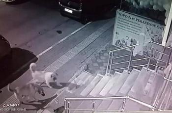 فيديو.. قطة (شجاعة) تقهر نصف دستة كلاب