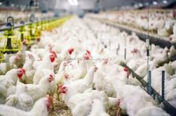 أسعار الدواجن واللحوم في غزة اليوم
