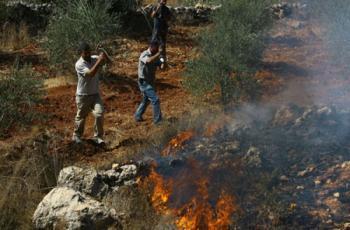 مستوطنون يضرمون النار بمحاصيل زراعية شرق يطا