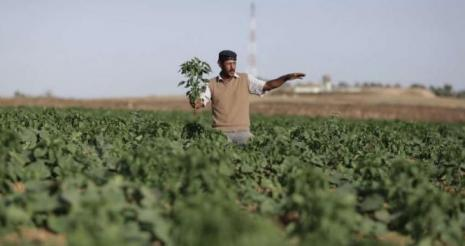 الاحتلال يطلق النار تجاه المزارعين جنوب قطاع غزة
