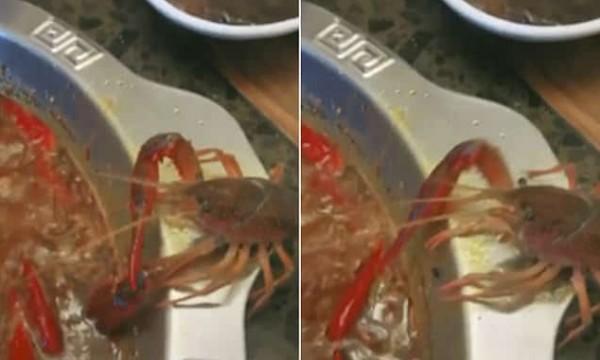 شاهد: لحظة هروب جراد البحر من قدر الطهو