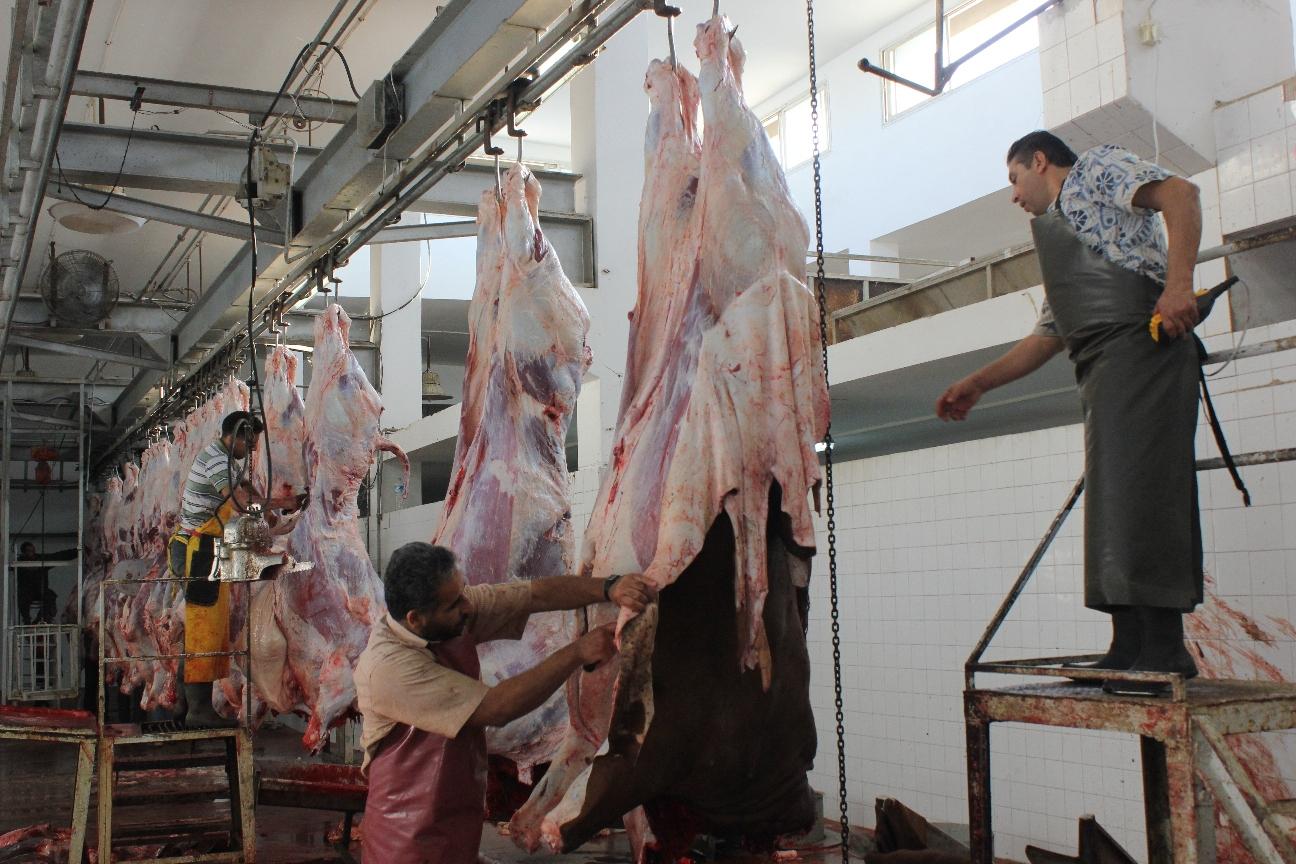 دائرة البيطرة في بلدية غزة تشرف على ذبح 630 رأسا من الماشية